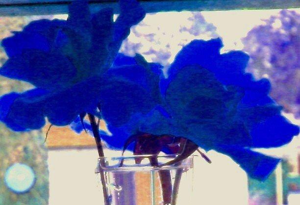 Blue rose by mel1forjon