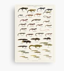 Salamanders & Newts of Europe Metal Print
