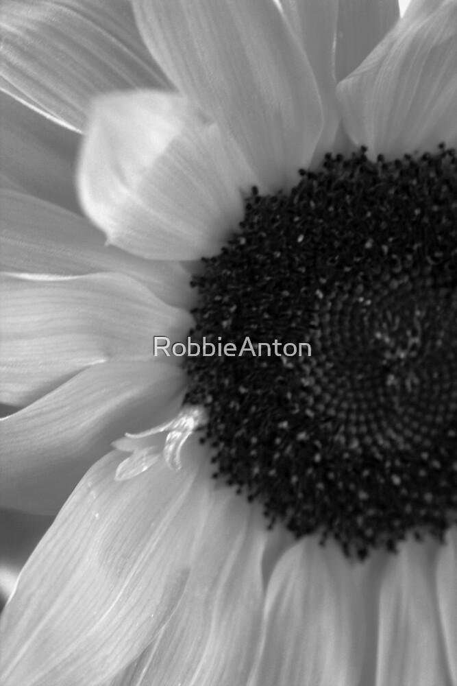 Sunflower Black & White by RobbieAnton