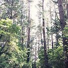 Tall trees by karenanderson