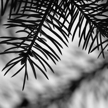 Pine by jwawrzyniak