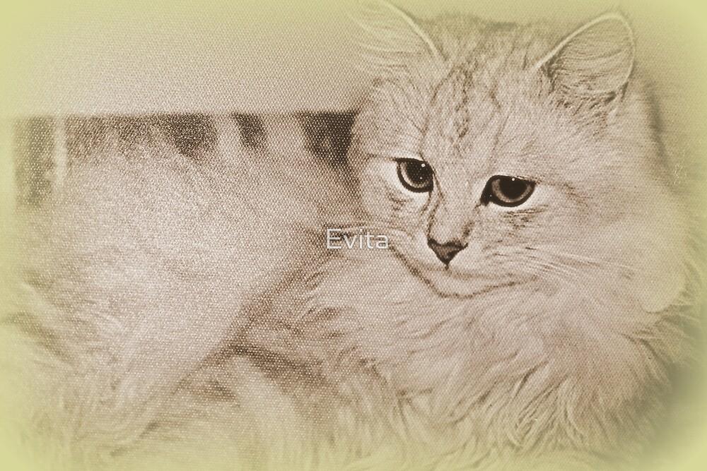 Memories Of My Kitty by Evita