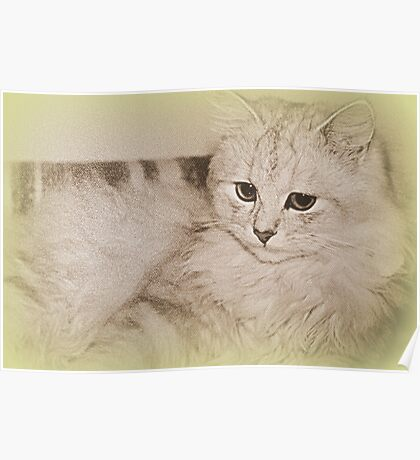 Erinnerungen an meine Kitty Poster