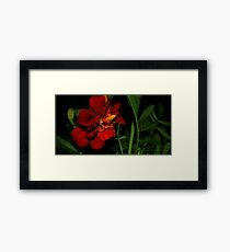 0330 - HDR Panorama - A Red Flower 3 Framed Print