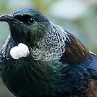 Tui.....A Prince of the Forest....!! by Roy  Massicks