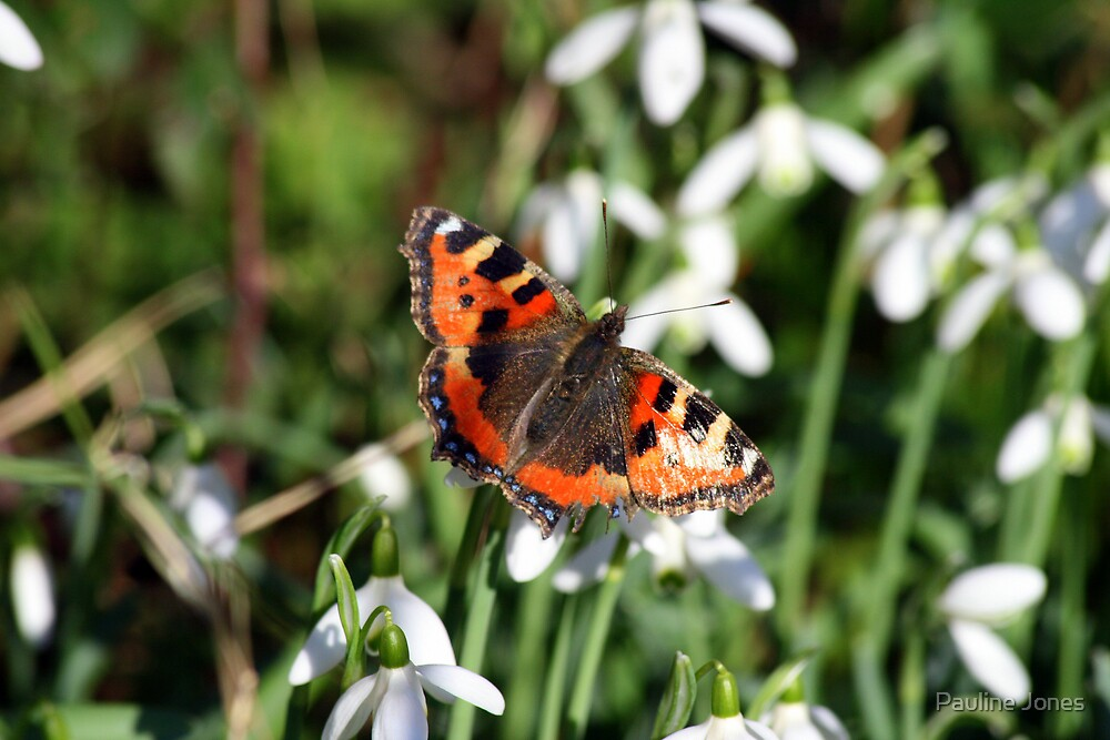 Early Butterfly by Pauline Jones