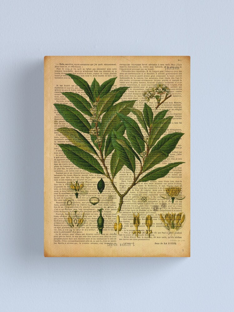 Botanical Print On Old Book Page Canvas Print By Lldd11 Redbubble