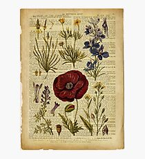 Botanical print, on old book page - flowers Photographic Print