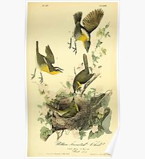 James Audubon Vector Rebuild - The Birds of America - From Drawings Made in the United States and Their Territories V 1-7 1840 - Yellow Breasted Chat Poster