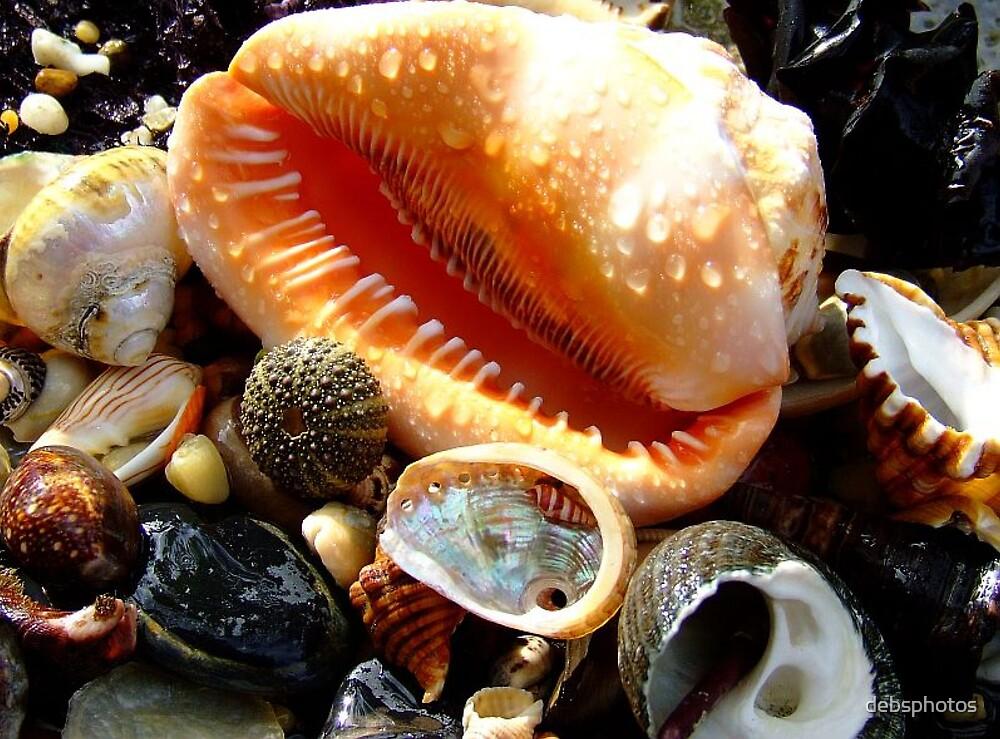 Sea shells......... by debsphotos