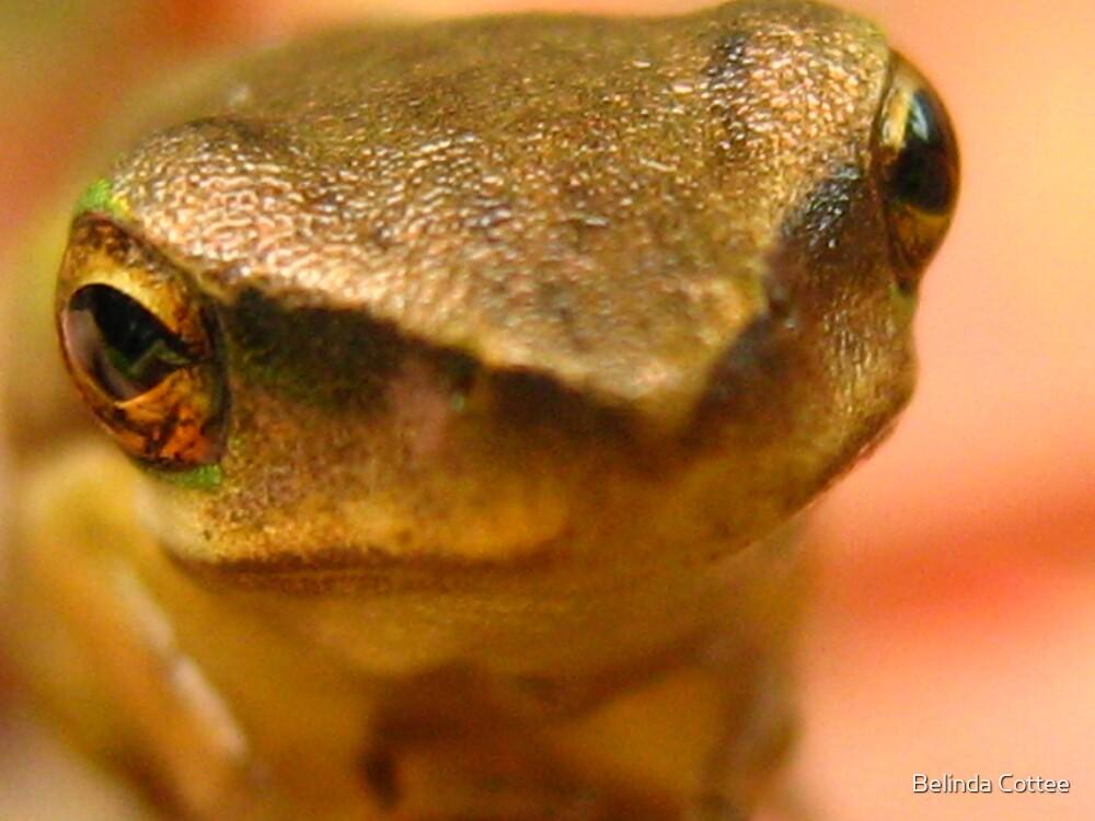 golden frog by Belinda Cottee