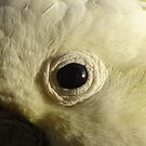 Cockatoo's Eye by scholara