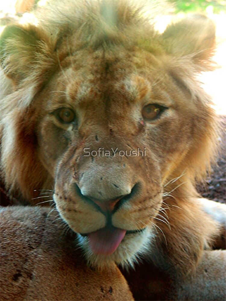 LION YOUNG by SofiaYoushi