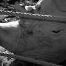 Sadness of Captivity by Niamh Harmon