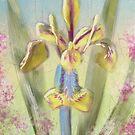 Pastel Iris by Lois  Bryan