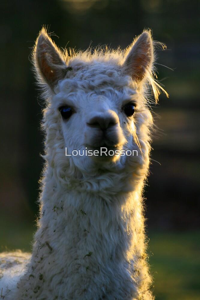 Alpaca by LouiseRosson