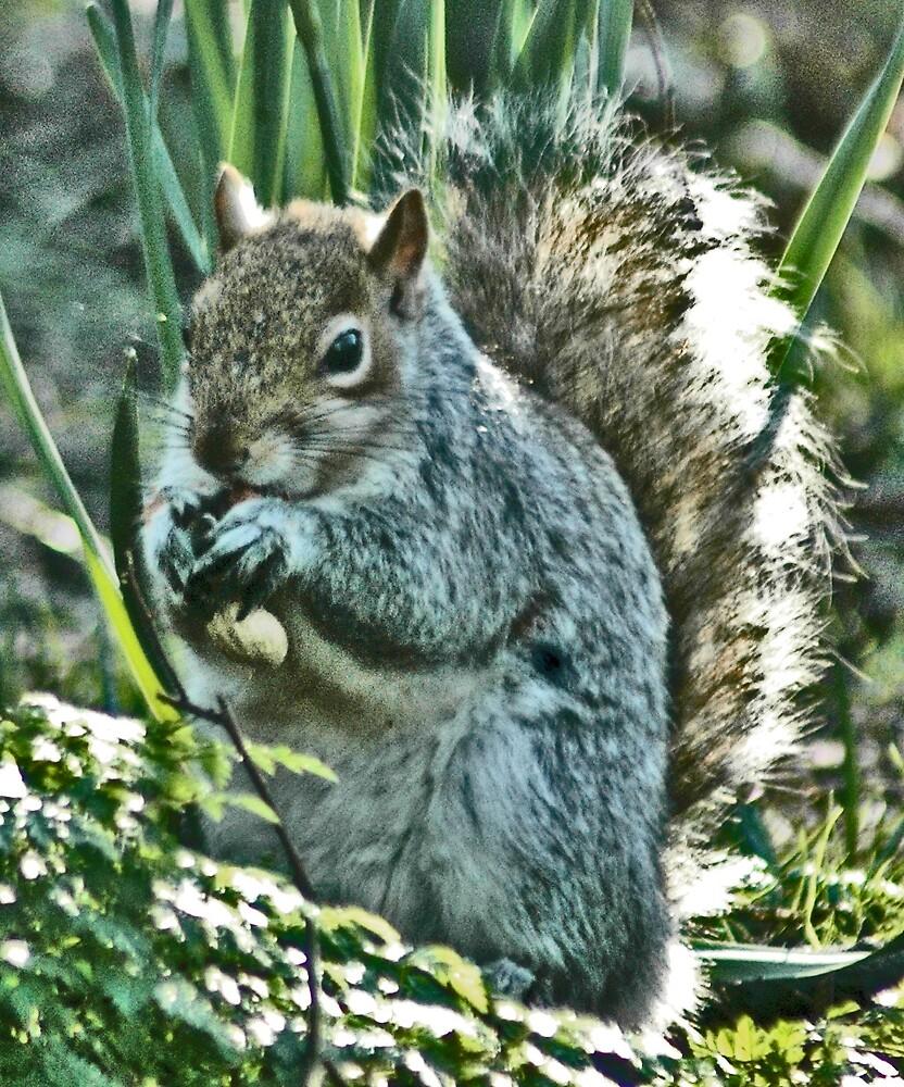 Squirrel so Cute by Cammi