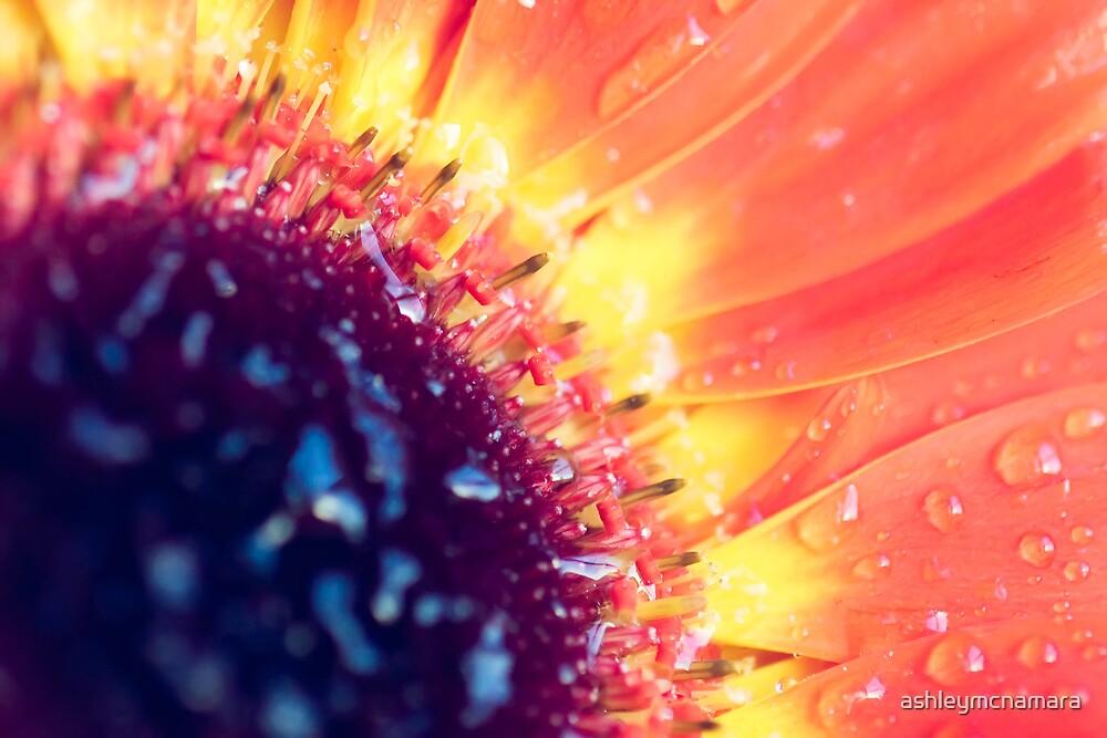 [the sun] by ashleymcnamara