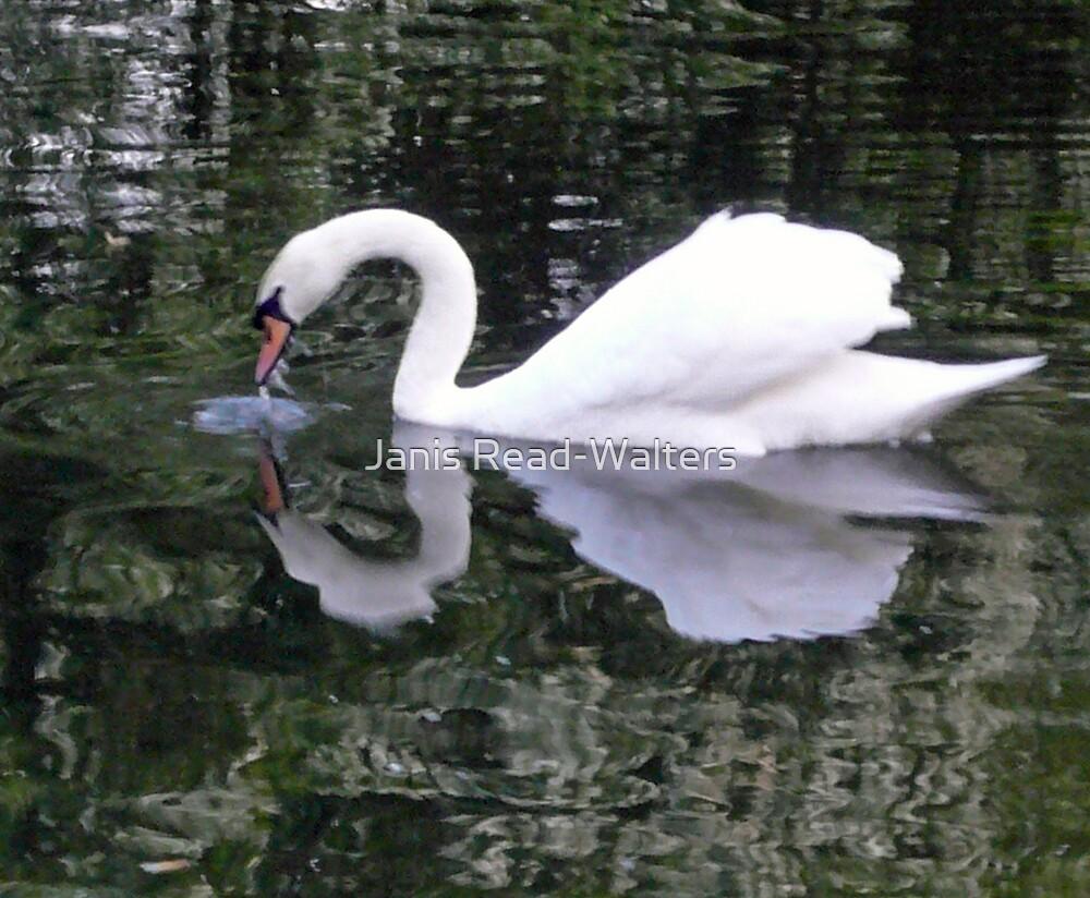 swan by Janis Read-Walters