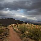 Desert Light and Beauty by Sue  Cullumber