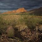 Beauty in the Desert by Sue  Cullumber