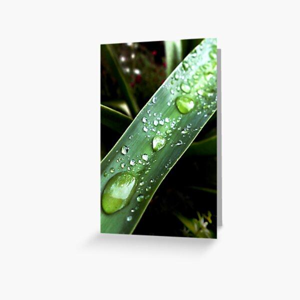 green drops Greeting Card