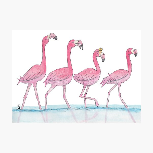 Flamingo or freedom Photographic Print