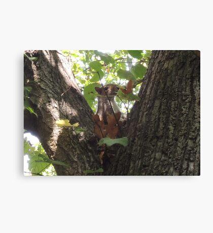 Showcasing a Leaf Costume Canvas Print