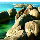 Elephant Cove by Penny Smith