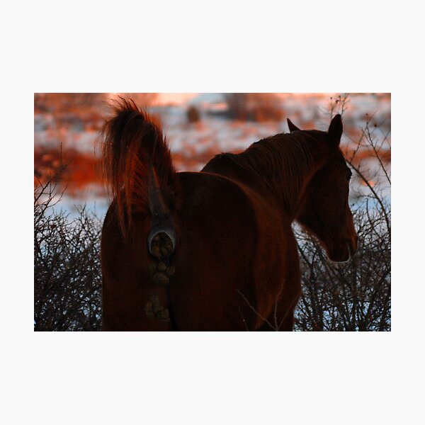 Don't be a horse's a@#!!! Photographic Print