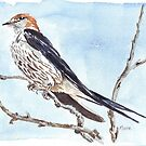 I'll wait for your return... Greater striped swallow by Maree Clarkson