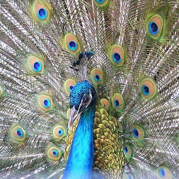Bird of Paradise by GodSaveTheKing