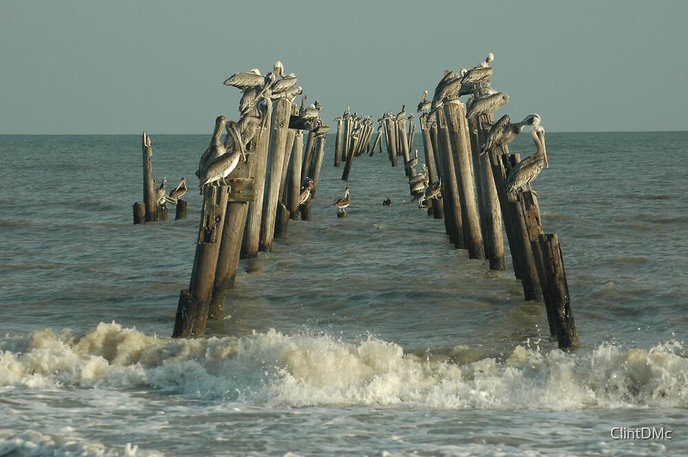 Brown Pelicans by ClintDMc