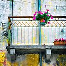 Geraniums on balcony by Silvia Ganora