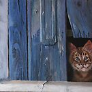 I'm watching by anton