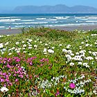 Dune Flowers by CrismanArt