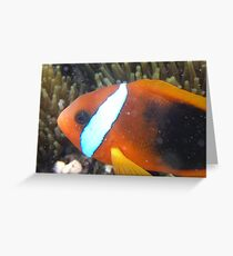 Nemo! Greeting Card