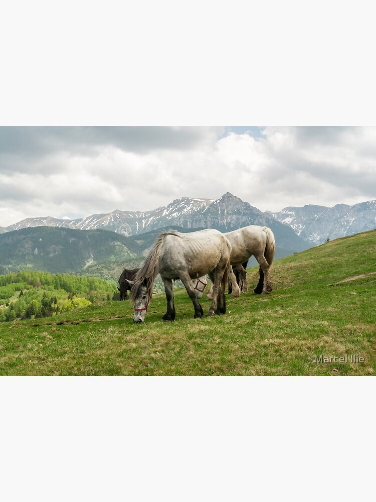 Keep grazing by imaruseru