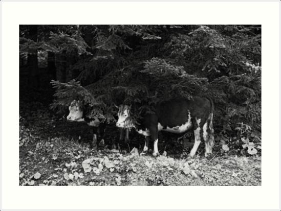 2014 Mucca Piemontese by robertoferrero