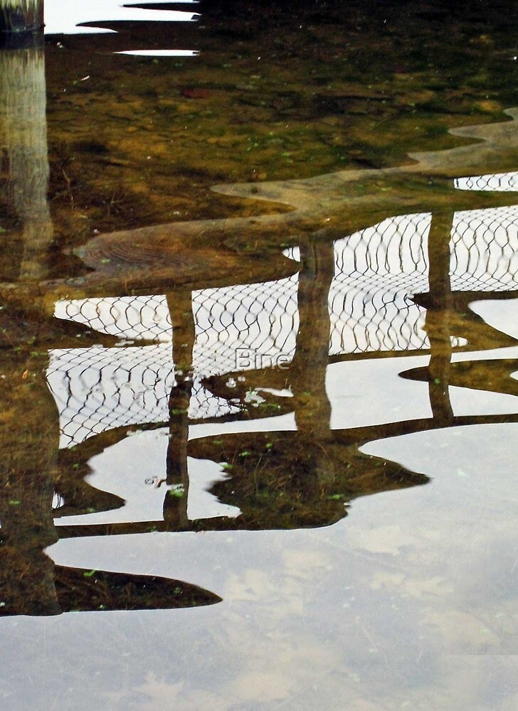 Reflections by Bine