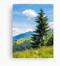 spruce tree on a mountain hill side Canvas Print