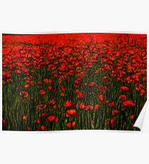 red poppy in the garden Poster