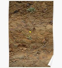 Bloom Survival Poster