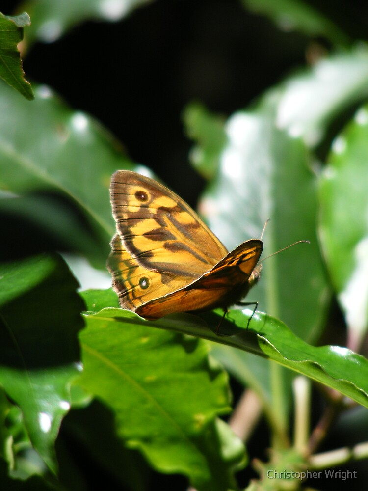 butterly by Christopher Wright