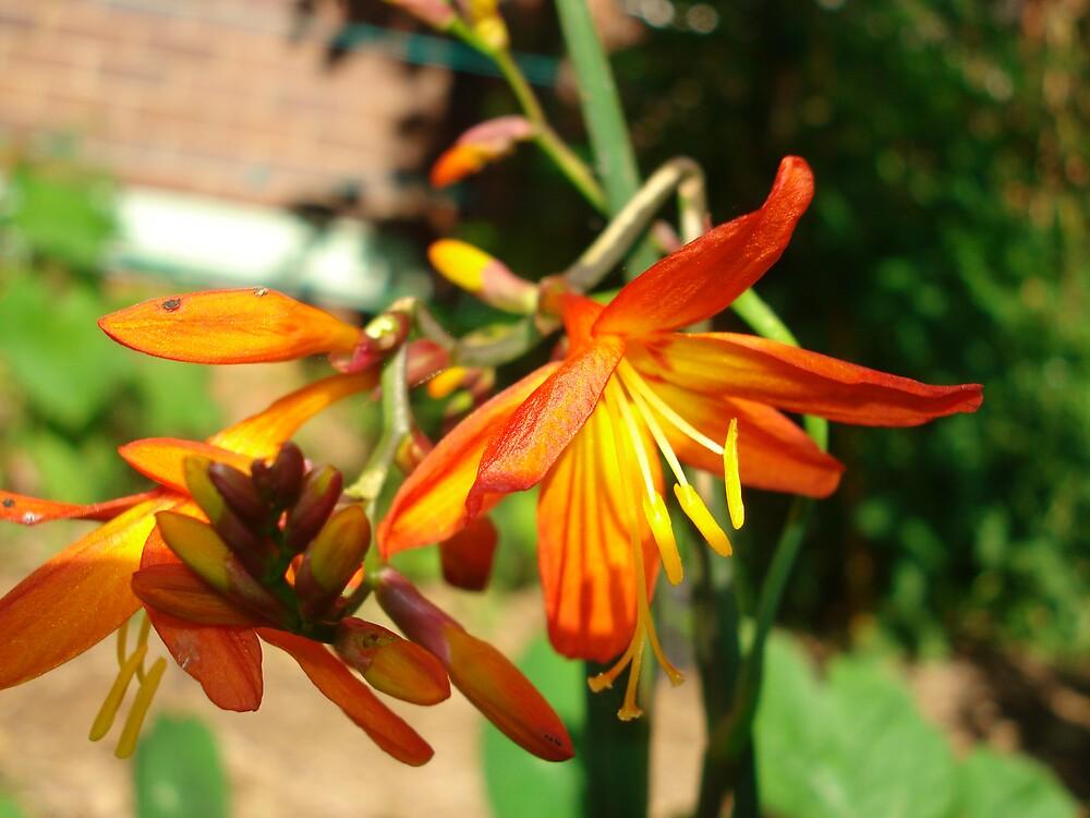 flower energy by kveta