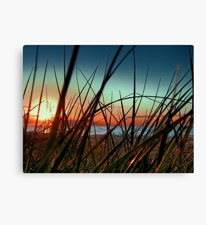 Sunset Grass. Canvas Print