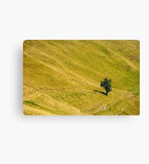 few trees on a mountain hill side Canvas Print