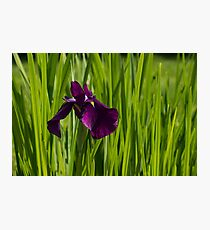 Sunny Green and Purple Summer Photographic Print