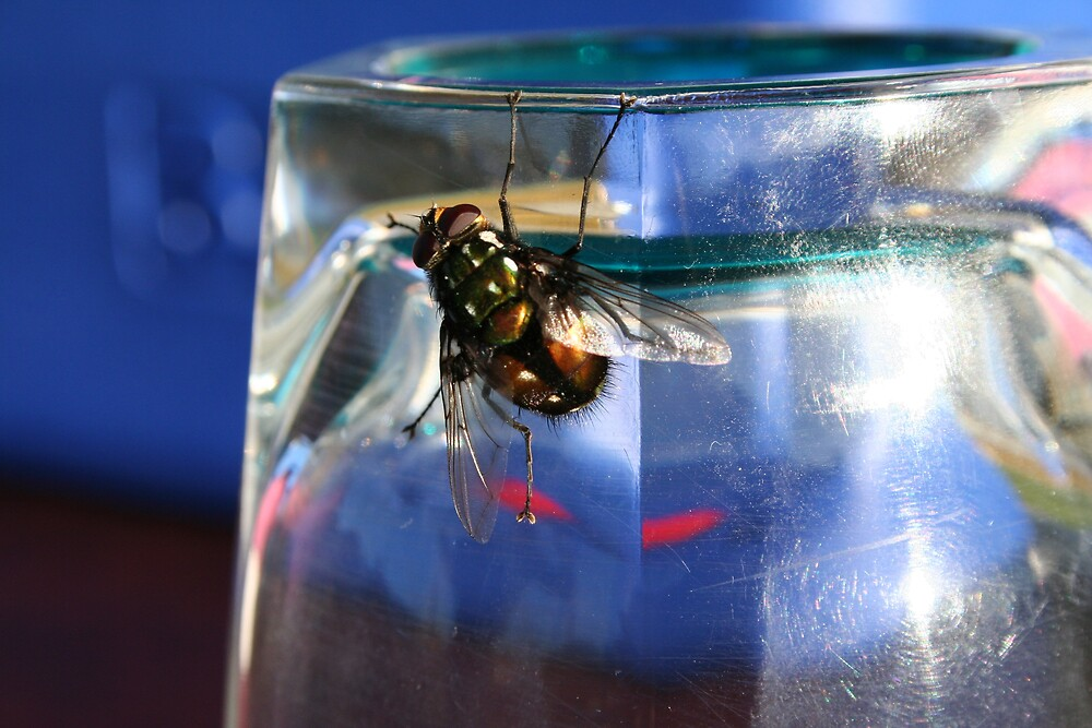 There's A Fly On My Glass! by Larry149