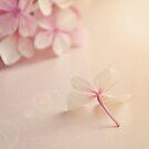 Pale pink Hydrangea flower. by Lyn  Randle
